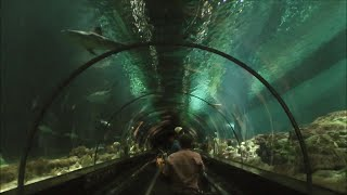 Shark Encounter, SeaWorld Orlando HD (1080p)