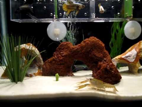 My betta tank setup part iii youtube for How to setup a betta fish tank