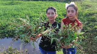Pick water convolvulus in my village with my sister and cooking