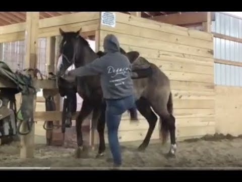 Barrel Horse Trainer Kicks Horse In The Stomach & Calls It Training