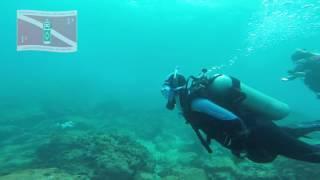 Mergulho na Ilha da Ancora - Armação dos Búzios - RJ