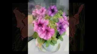 Азалия .Уход и выращивание(Аза́лиями называются некоторые красивоцветущие рододендроны. Цветки азалии обычно розовые, но существуют..., 2014-05-25T19:21:47.000Z)