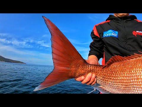 SNAPPER FISHING BAD BREAK!