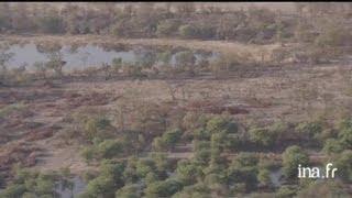 Botswana : enclos à bétail