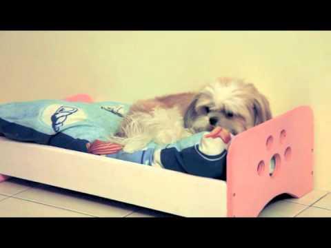 dog-bed-frame