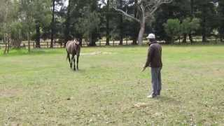 old racehorse gives a special welcome to his owner after not seeing each other for 3 years