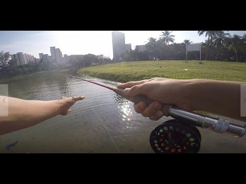 Fly Fishing in Singapore, Coho tackle shop, OFO | Facepalmfishing Vlog #5