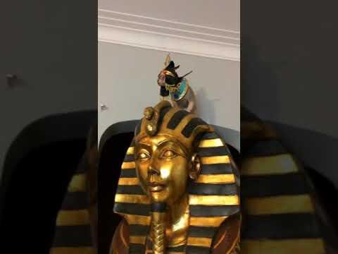 Cairo as a modern day Pharaoh