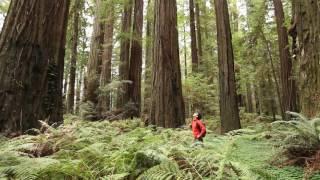 reedwoord trees los arboles gigantes california