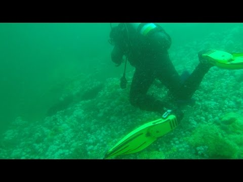 Spearfishing The Wrecks Off Chincoteague Virginia For Flounder