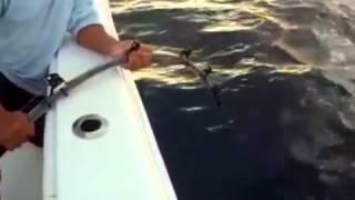 Морская Рыбалка На Снасти Shimano. Особенности Морской Рыбалки. [Снасти Для Морской Рыбалки Купить](Где взять средства на крутую рыбалку? ОТВЕТ ЗДЕСЬ!!! ЖМИ - http://binaryreview.blogspot.com/ секреты рыбалки на тарпона..., 2015-02-06T14:34:26.000Z)