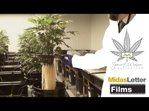 BEST CANNABIS GROW EVER!! Aeroponic Cannabis By James E Wagner!!