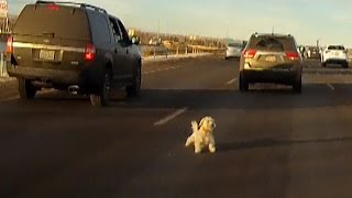 Watch As Dog Leaps From Moving Car, And Narrowly Misses Getting Hit