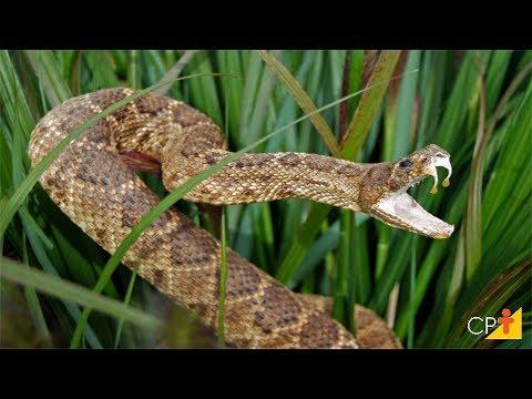 Clique e veja o vídeo Curso Criação de Serpentes Para Produção de Veneno CPT