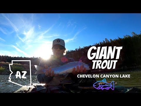GIANT TROUT- Fly Fishing Chevelon Canyon Lake AZ (Mongollon Rim)