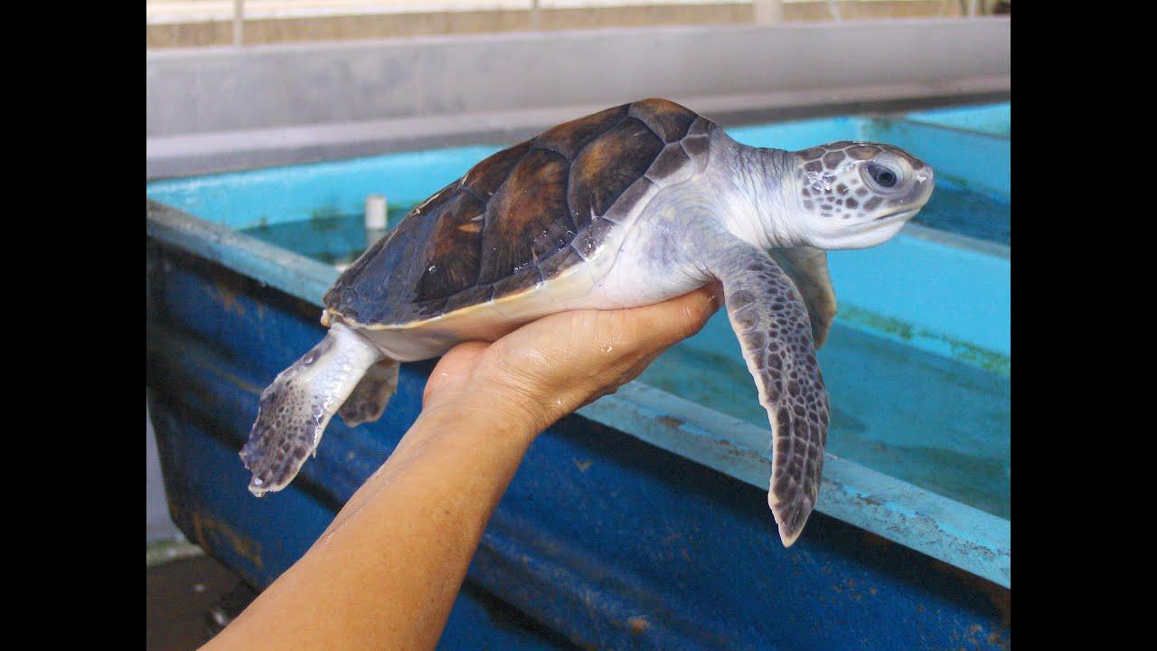 Tocando una tortuga youtube for Piscina para tortugas