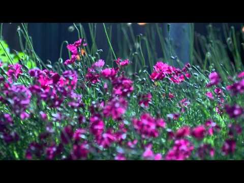 ดอกไม้สวยๆ