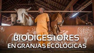 Sistema Biobolsa en la Granja Ecológica Govardhan en la India