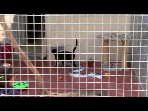 abandons d animaux avant les vacances la spa se mobilise doovi. Black Bedroom Furniture Sets. Home Design Ideas