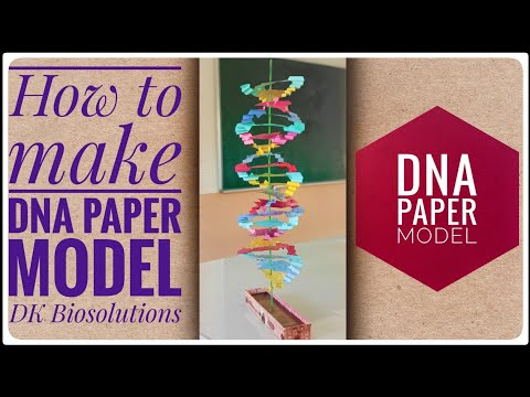 DNA paper model | Science Exhibition working Model for School 🏫