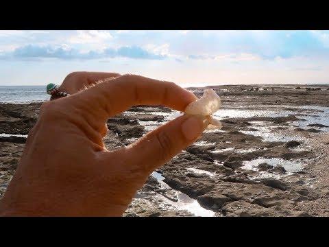 Hermit Crab Costa Rica Drone