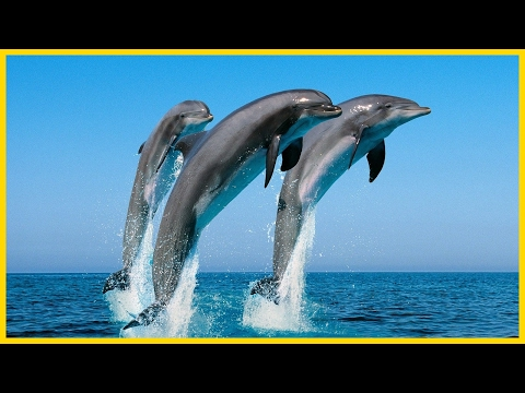 Swimming With Dolphins - Dolphin Encounter - HD Documentary