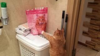 Кот атакует картинку с другим котом