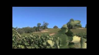 Fly With Us To C.G. Di Arie Winery