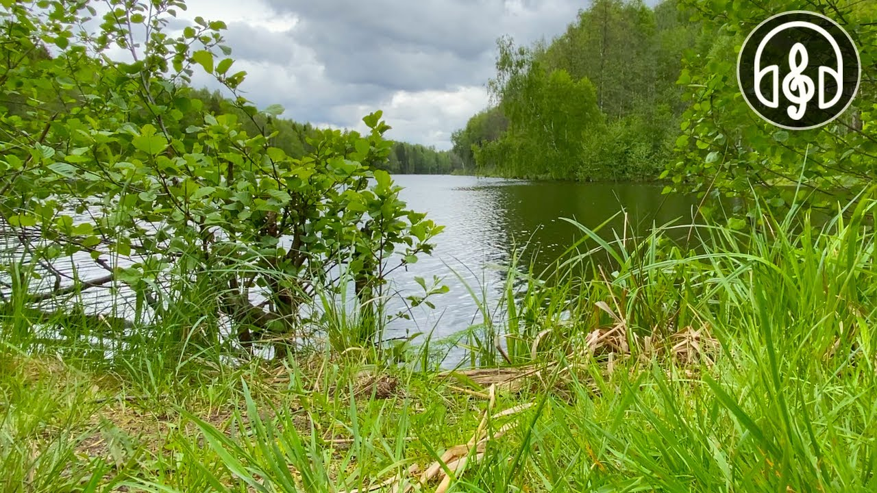 Relaxing Birdsong By A Forest Lake. White Noise Water For Sleep and Relaxation