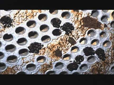 Silent Invaders Episode 2: Zebra & Quagga Mussels