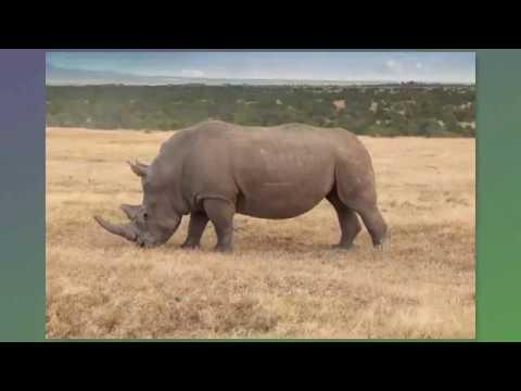 Africa Safari - Sweetwaters Tented Camp, Ol Pejeta Conservancy - February 13, 2019
