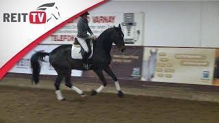 Das Junge Pferd Versammeln - Jean Bemelmans In Hannover Teil 1d | Die Alten Meister