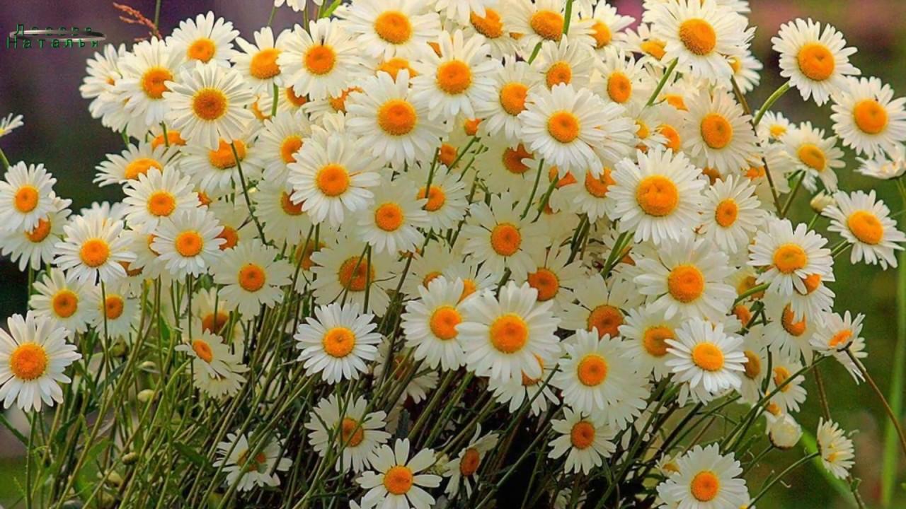 Березами, картинки анимация полевых цветов
