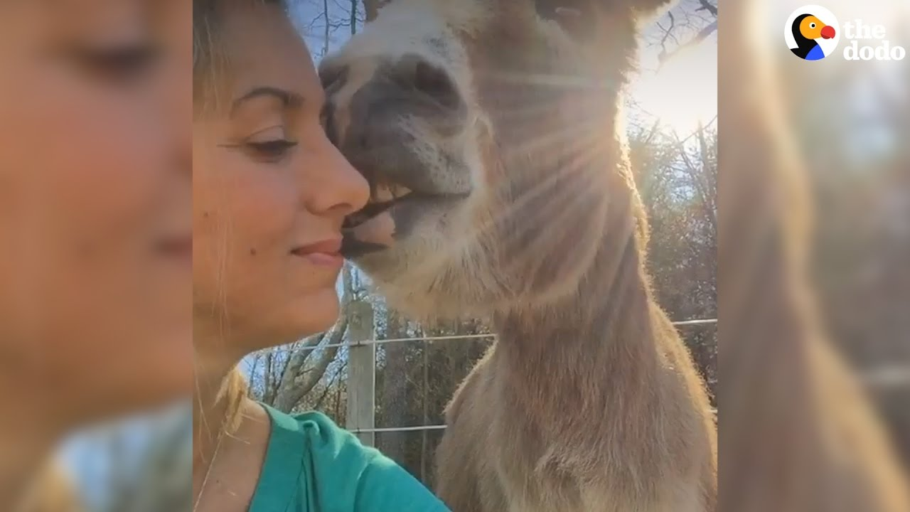 Rescued Donkey Acts Like A Puppy | The Dodo