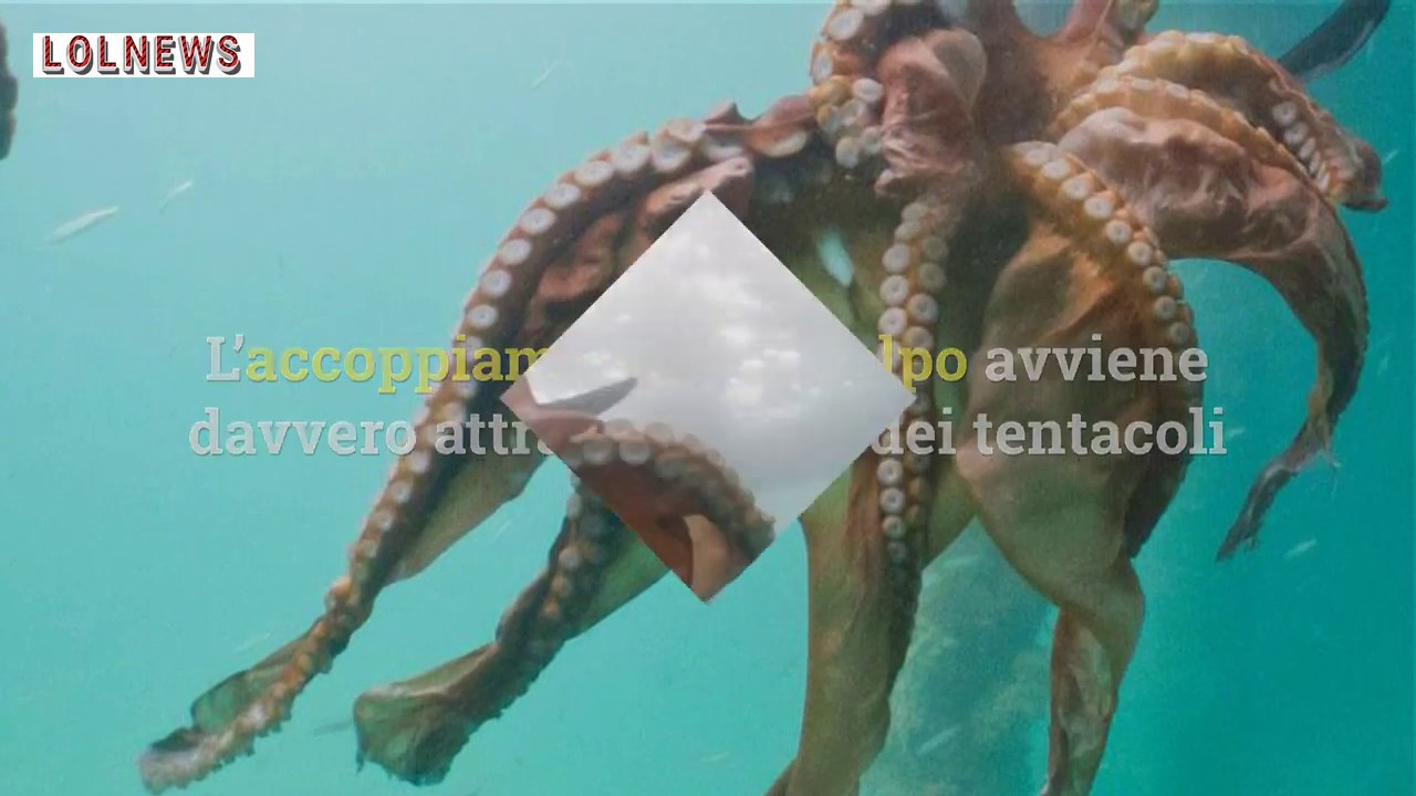 Masterchef 8. Bruno Barbieri come Piero Angela: la lezione sul tentacolo intimo del polpo maschio