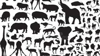 Топ-7 самых красивых животных из красной книги
