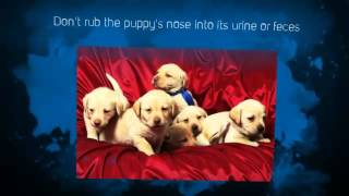 Free Puppy Training Tips | Puppy Potty Training Tips |  Pitbull Puppy Training Tips |
