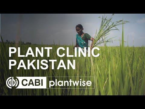 Plantwise plant clinic -  Pakistan