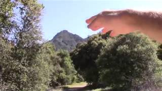 A-list Hollywood Insider Describes Personal Extraterrestrial Contact thumbnail