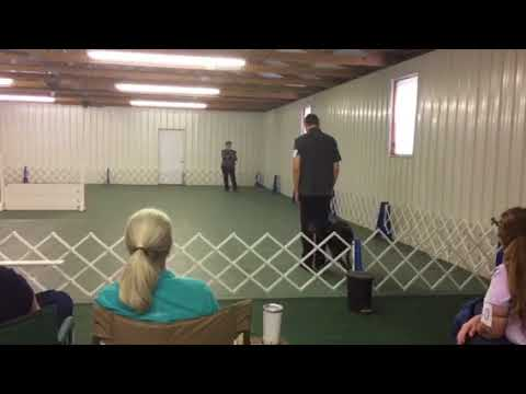 Mark & Sarge Open A Augusta Kennel Club August 2017