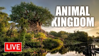 🔴 Live: A Fun Evening at Disney's Animal Kingdom | Walt Disney World Live Stream