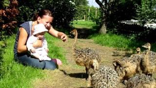 Straußenbabies treffen Babies