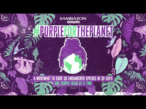 Sambazon // 2018 #PurpleForThePlanet Case Study