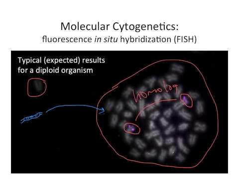 Molecular Cytogenetics