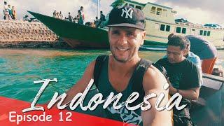 THE ADVENTURE TO HOGA ISLAND   INDONESIA VLOG SE02 EP12