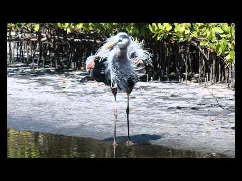 Merritt Island Florida Wildlife Refuge - A National Treasure for Migrating Birds