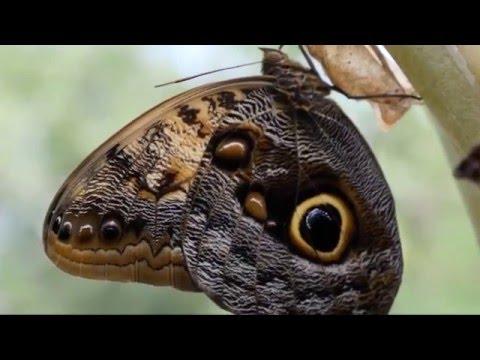 Красивые Бабочки и Цветы! Музыка для души!