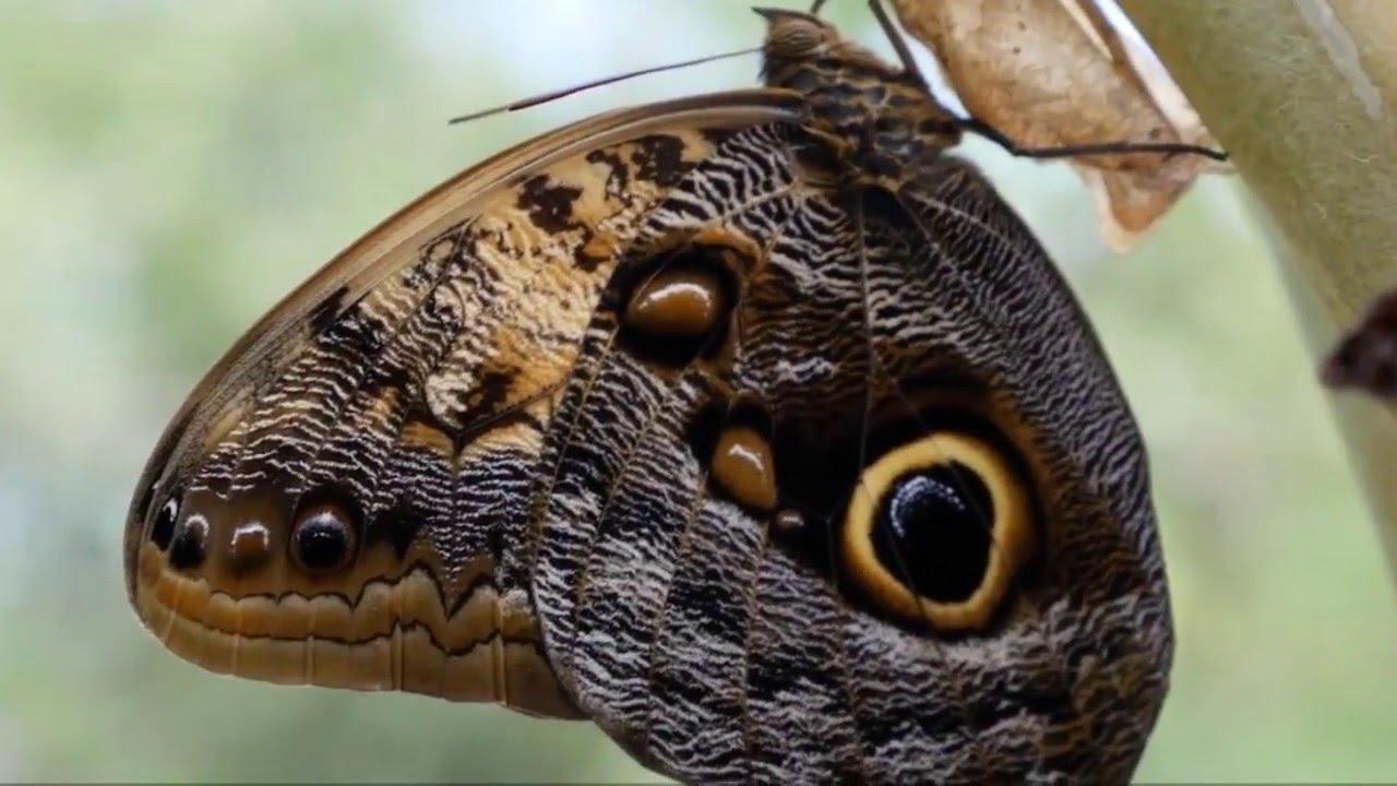 Красивые Бабочки и Цветы! Музыка для души! - YouTube
