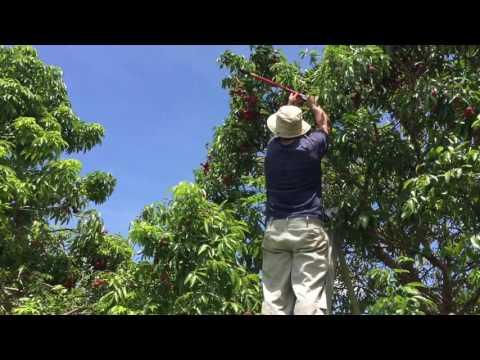 Miami Fruit Harvest Day