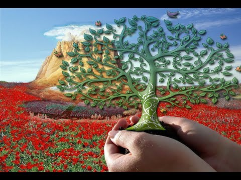 Temple Talk Radio: Tu B'Shvat & the Holy Temple: Rejoicing in the Fruit of the Land